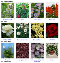 Безплатни луковици, цветя, овощни дървета и други семена за вашата градина